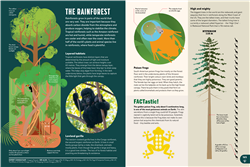 Explore 2 Habitats: The rainforest