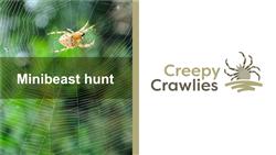 Explore 1 Minibeast hunt: teaching slides