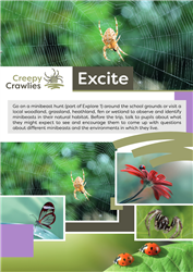 Creepy Crawlies: Excite