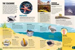 Explore 2 Habitats: The seashore
