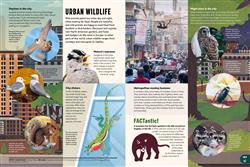 Explore 2 Habitats: Urban wildlife